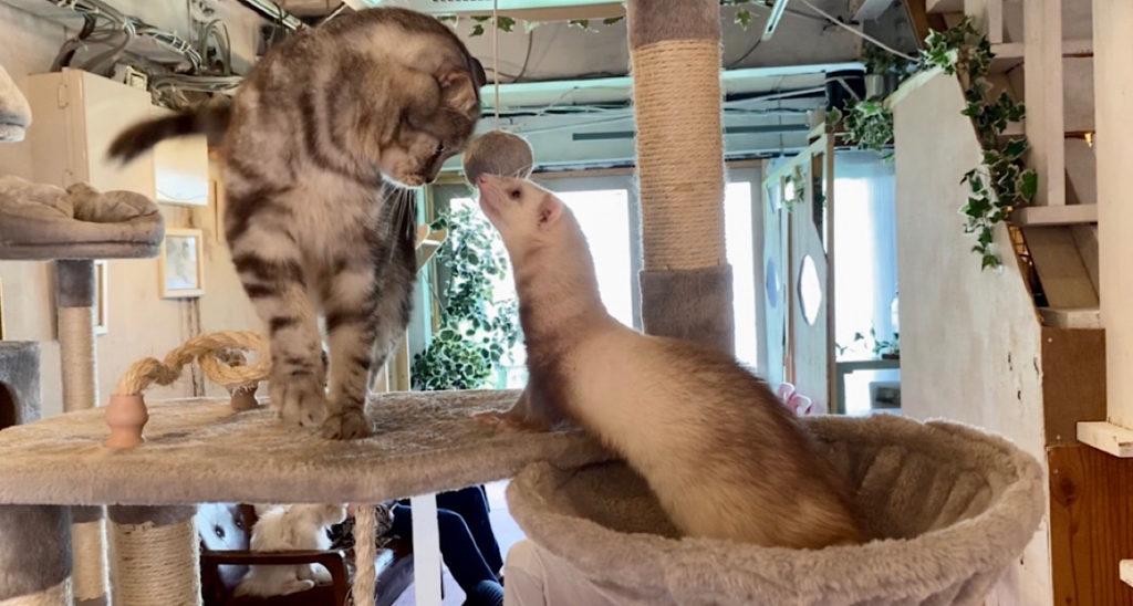 フクロウコーヒーの猫