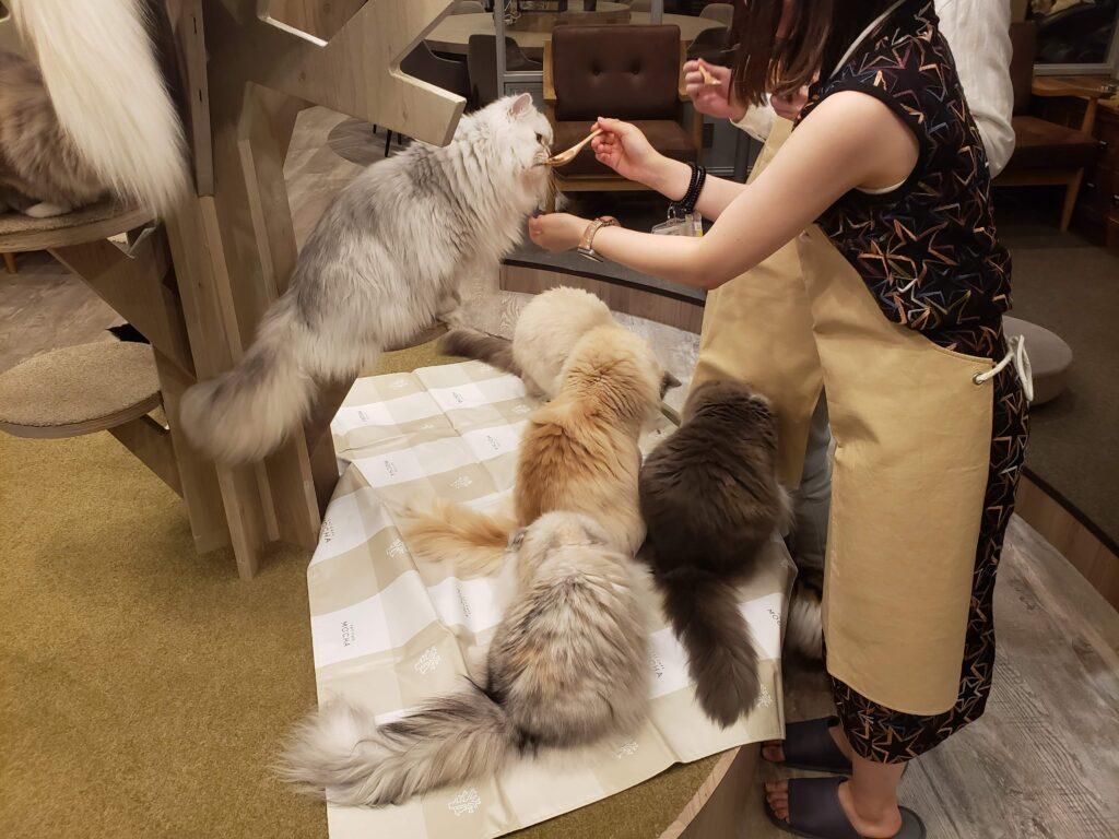 猫カフェモカラウンジ渋谷公園通り店