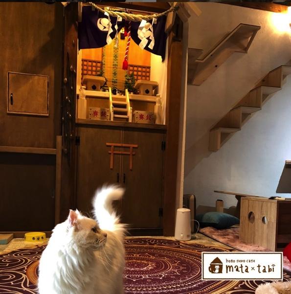 札幌保護猫シェルター&福祉運営カフェmata x tabiの店内