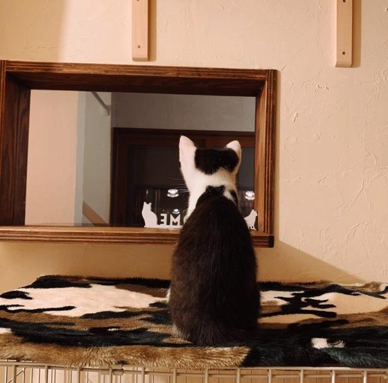 札幌保護猫シェルター&福祉運営カフェmata x tabiの猫