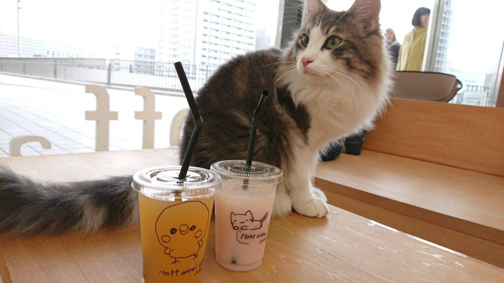 Moff animal cafe 水戸オーパ店の猫