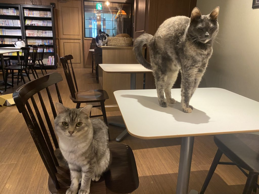 カフェきゃらふの店内