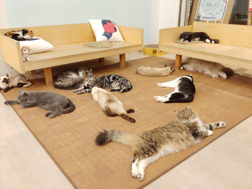 Moff animal cafe 水戸オーパ店の店内