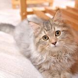 【今さら聞けない】猫カフェってどんなところ?どうやって過ごすの?