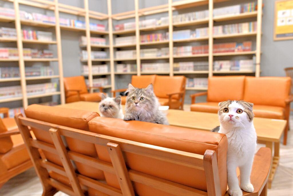 猫カフェ店内