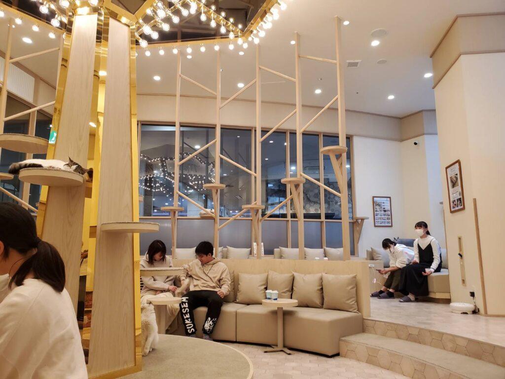 猫カフェモカイオンモール筑紫野店店内
