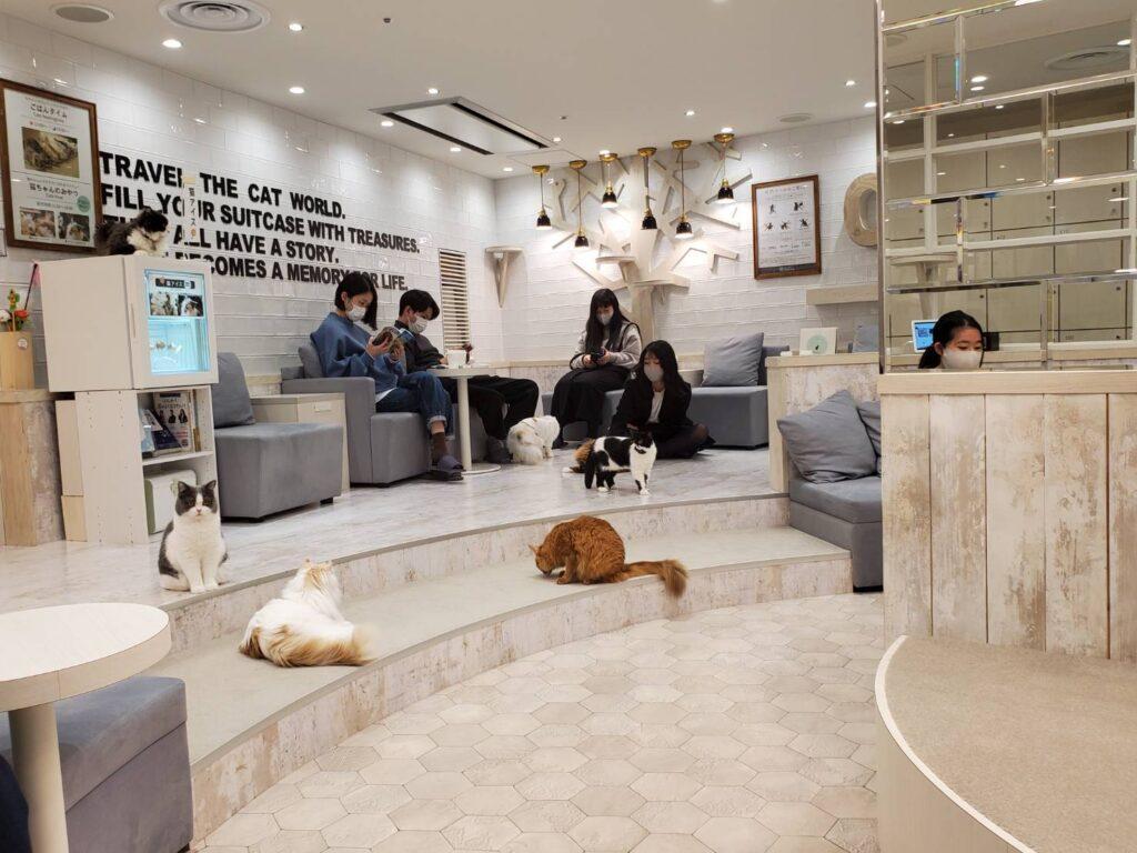 猫カフェモカ店内