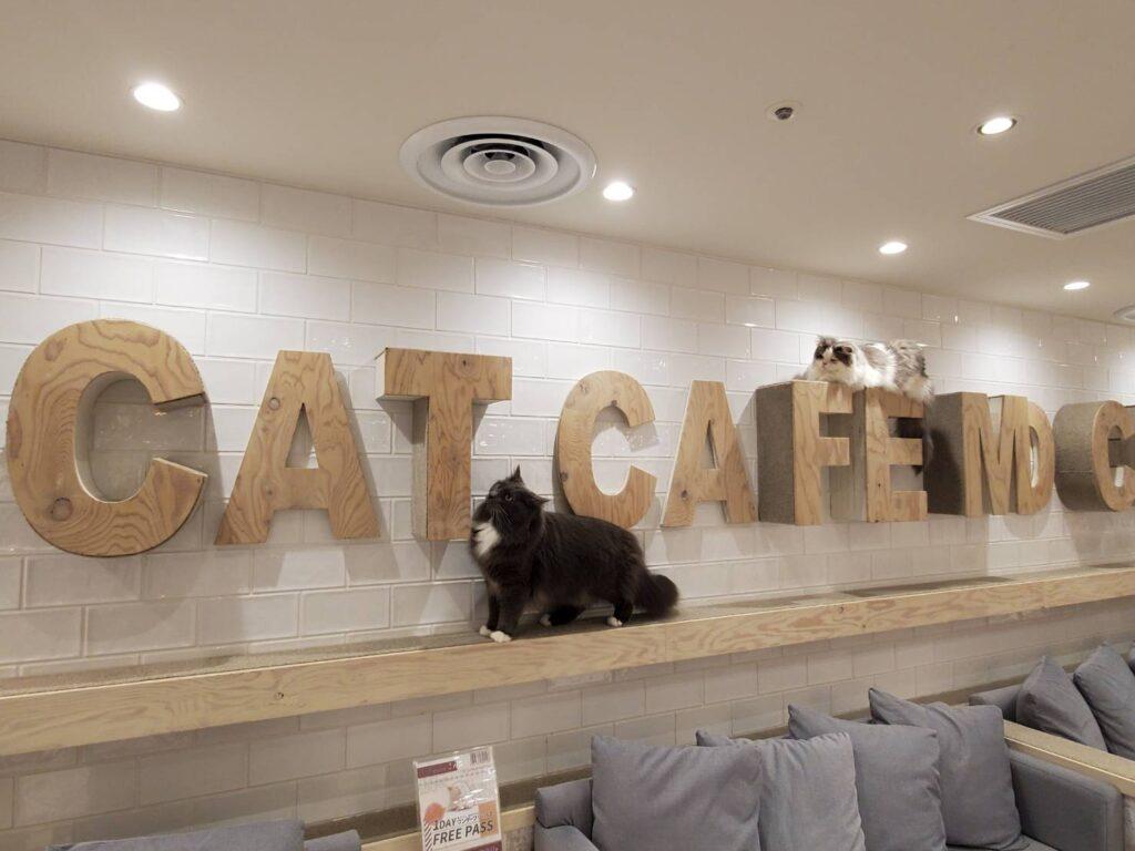 catcafe-mocha