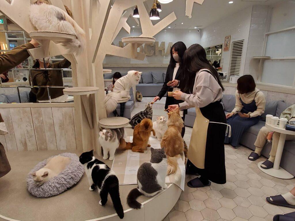 猫カフェモカ町田ジョルナ店のおやつ