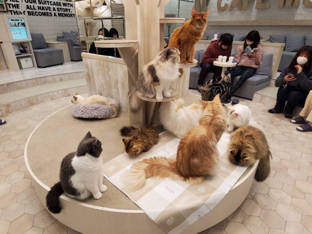 猫カフェモカ町田ジョルナ店の猫