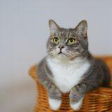 【2021年版】福岡県でおすすめの猫カフェ21選【新店情報あり】