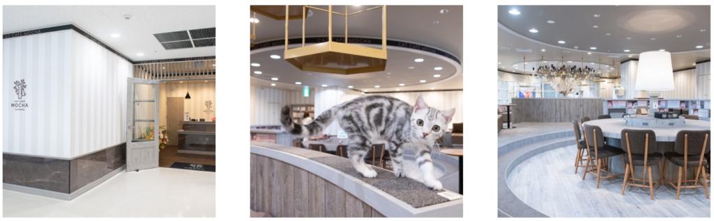 猫カフェモカ立川店