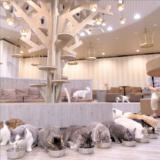 【2021年版】立川でおすすめの猫カフェ「MOCHA(モカ)立川店」をご紹介!