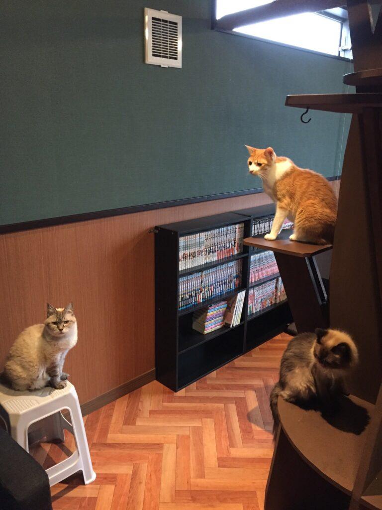 猫カフェ Saiam店内