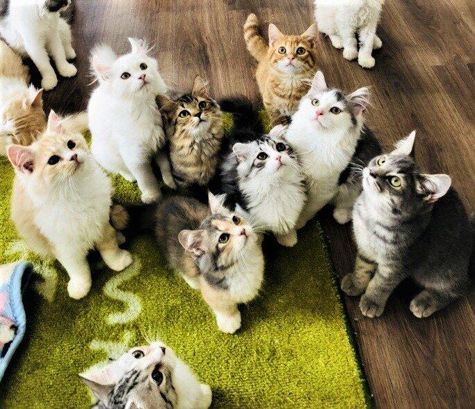 猫の部屋 セイワ