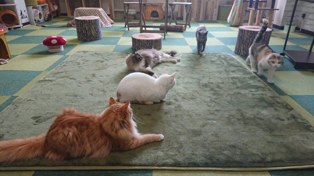 猫カフェ ねこあそび!