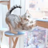 【2021年版】原宿でおすすめの「猫カフェモカ」をご紹介!