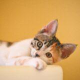 【2021年版】神奈川県でおすすめの猫カフェ19選【横浜・川崎以外】